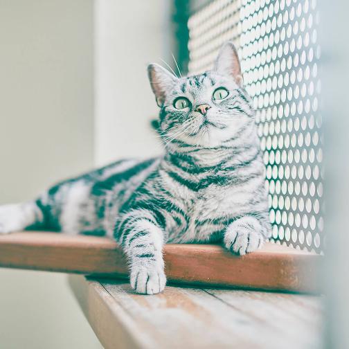 猫のロンパールーム